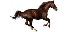 seguros_caballos