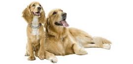 seguros_perros
