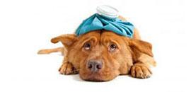 salud-perros